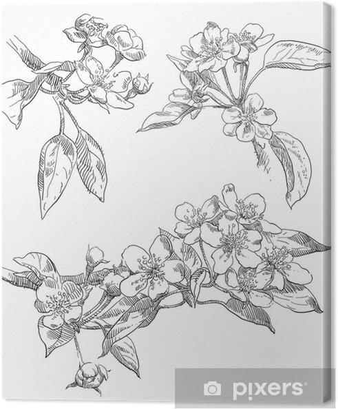 Obraz Na Platne Rucni Kresba Jablko Kvet Kvet Pixers Zijeme Pro