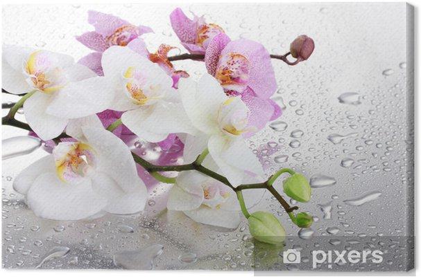 Obraz na plátně Růžové a bílé krásné orchideje s kapkami - Témata