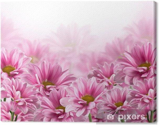 Obraz na plátně Růžový kvetoucí chryzantémy květiny - Květiny