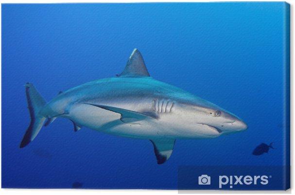 ebf72b7c045 Obraz na plátně Šedý žralok čelisti připravené k útoku pod vodou zblízka  portrét - Vodní a