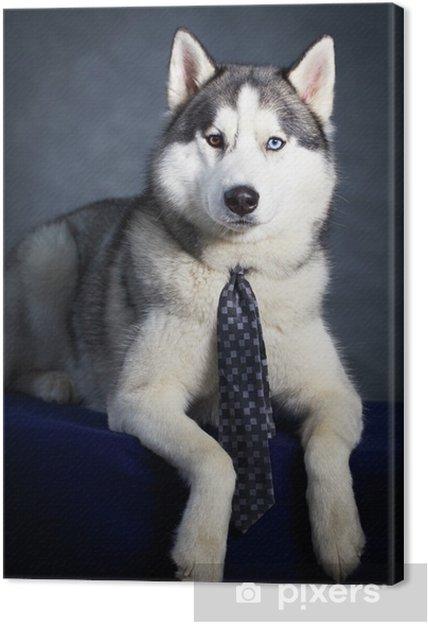 Obraz na plátně Sibiřský husky pes • Pixers® • Žijeme pro změnu aee3617f39