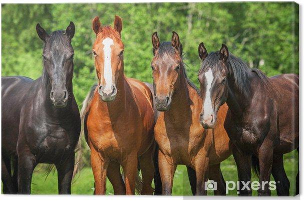 Obraz na plátně Skupina mladých koní na pastvě - Témata