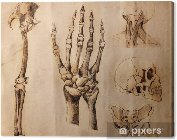 Obraz Na Platne Stare Kresby Anatomie Casti Tela Pixers