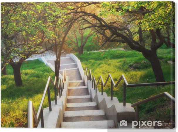 Obraz na plátně Sunshine v krásném parku - Témata