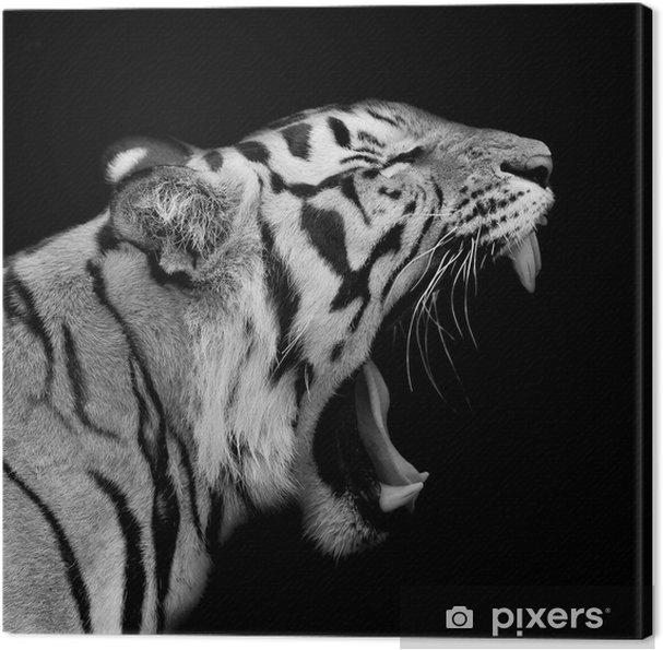 Obraz na plátně Tygr sumaterský Roaring - Osud