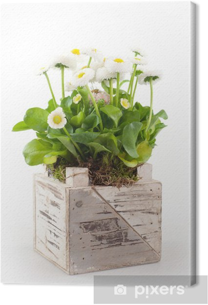 Obraz na plátně Váza z sedmikrásky - Zemědělství