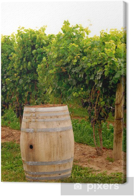 Obraz na plátně Vinný sud na vinici - Zemědělství