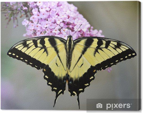 Obraz na plátně Východní tiger otakárek - Témata