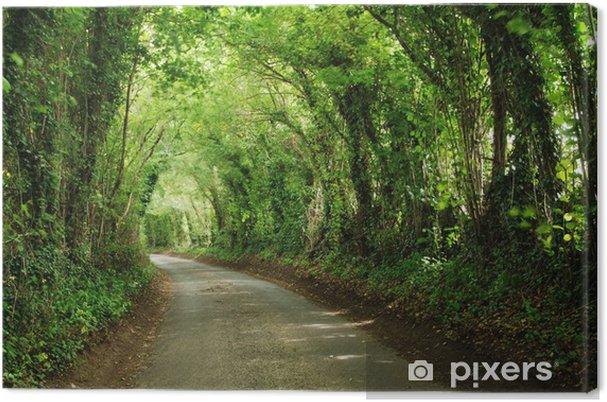 Obraz na plátně Zelená tunel - Témata