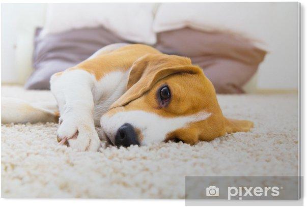 Obraz na Pleksi Zmęczony pies na miękkim dywanie po treningu - Zwierzęta