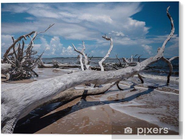 Obraz na Plexiskle Pobřeží floridy - Krajiny