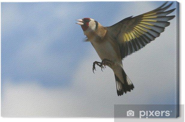 Obraz na płótnie 02 Szczygieł - Ptaki