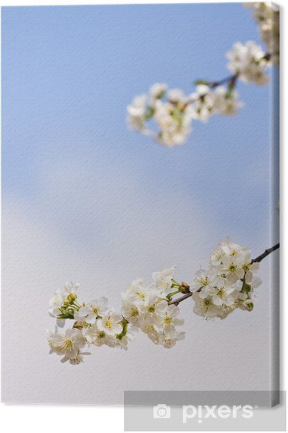 Obraz na płótnie 7,05,11 - Drzewa