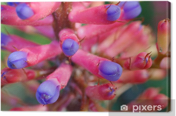 Obraz na płótnie Aechmea gamosepala - Cuda natury