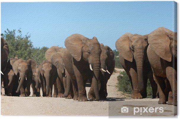 Obraz na płótnie African stado słoni, - Tematy