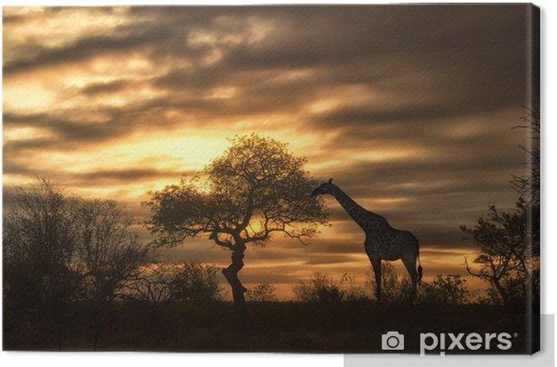 Obraz na płótnie African żyrafa spaceru w zachodzie słońca - Tematy