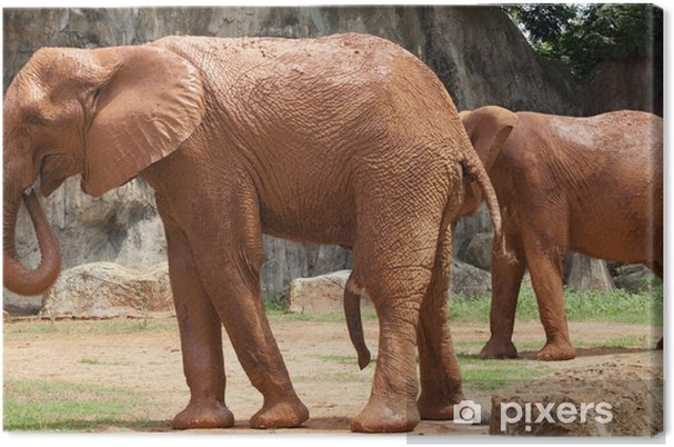 8ebe65cc50b421 Obraz na płótnie Afryka słoń • Pixers® - Żyjemy by zmieniać