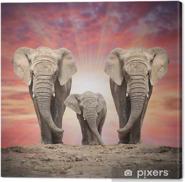 Obraz na płótnie Afrykańska rodzina słoń na drodze. - Tematy