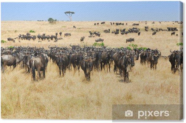 Obraz na płótnie Afrykański krajobraz z antylopy gnu - Afryka