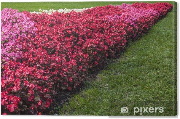 Obraz na płótnie Aiula kwiaty w Budapeszcie - Kwiaty