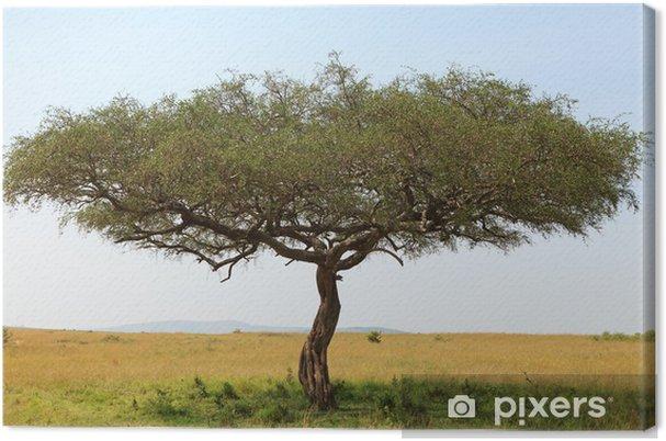 Obraz na płótnie Akacji w Afryce - Drzewa