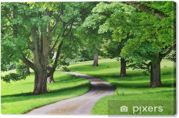 Obraz na płótnie Aleja drzew z kręta droga przez - Inne pejzaże