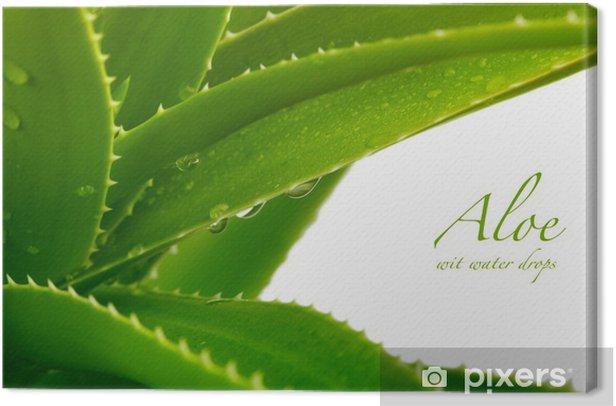 Obraz na płótnie Aloes - Rośliny