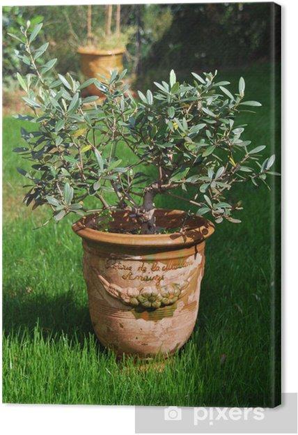 Obraz na płótnie Anduze wazon 1 - Drzewa