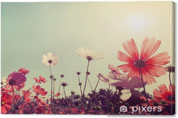 Obraz na płótnie Archiwalne krajobrazu przyrody tle Piękny kwiat Cosmos polu na niebo z promieni słonecznych. Kolor retro efekt filtra tonu - Rośliny i kwiaty