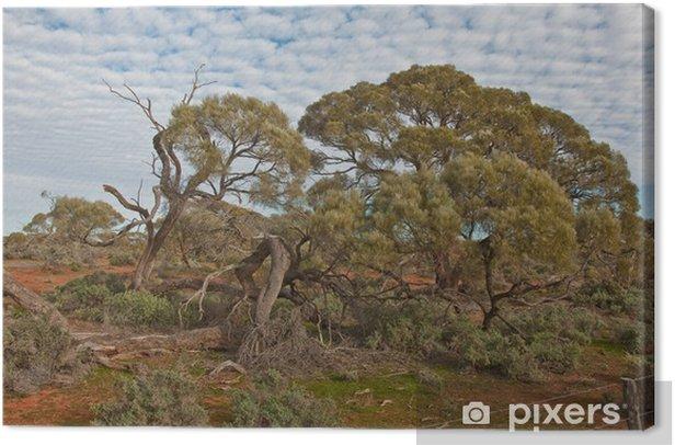 Obraz na płótnie Australian krajobraz, Australia Południowa - Oceania