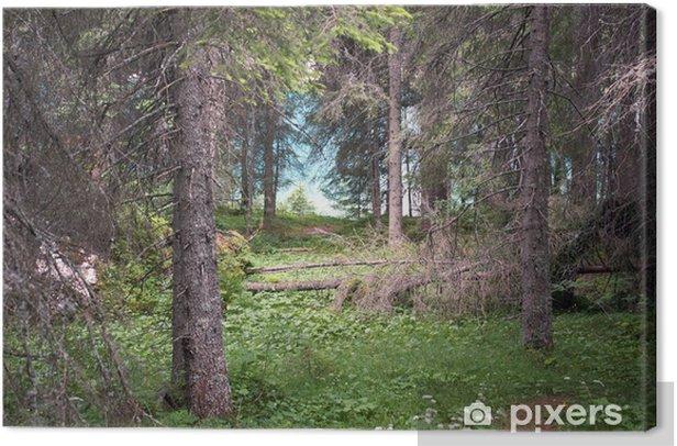 Obraz na płótnie Azeroth - Lasy