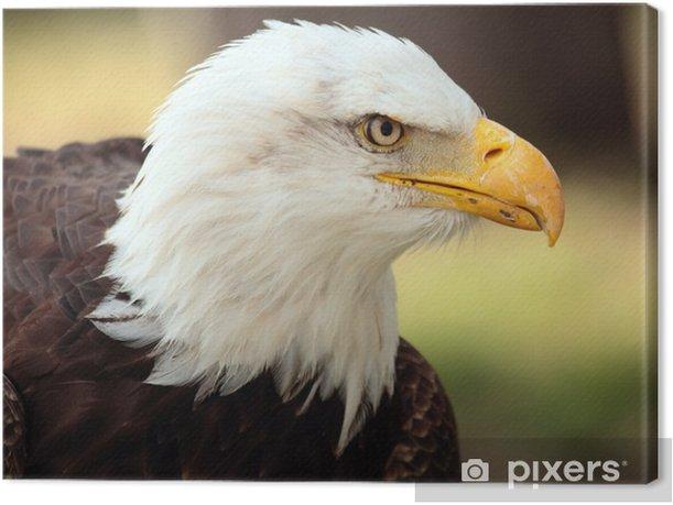 Obraz na płótnie BALD Portret EAGLE - Tematy