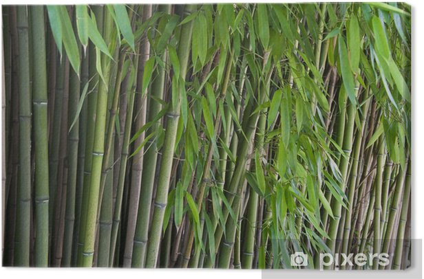 Obraz na płótnie Bamboo z liśćmi - Uroda i pielęgnacja ciała