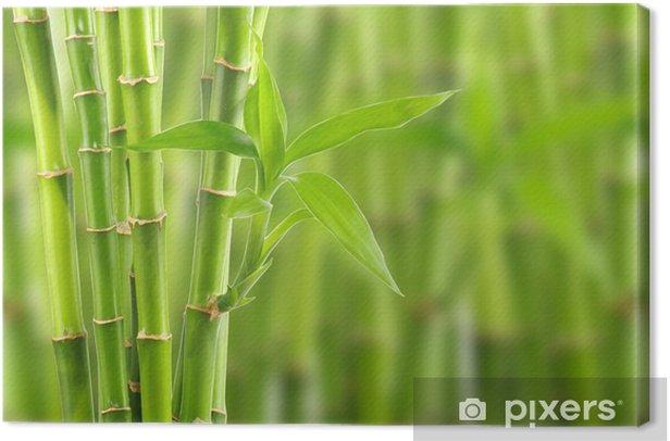 Obraz na płótnie Bambus - Style