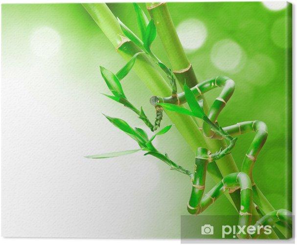 Obraz na płótnie Bambus - Rośliny