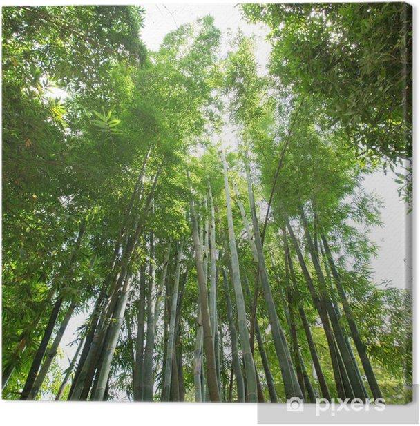 Obraz na płótnie Bambusowy las - Tematy