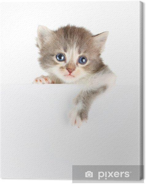 Obraz na płótnie Banner Kitten - Ssaki