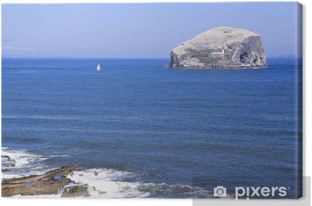 Obraz na płótnie Bass skalny szkocja kolonie ptaków morskich - Europa