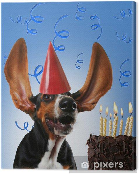 Obraz na płótnie Basset hound urodziny - Świętowanie