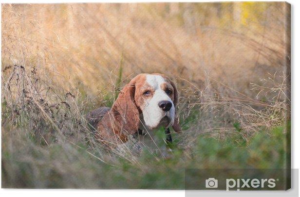 Obraz na płótnie Beagle w lesie - Ssaki