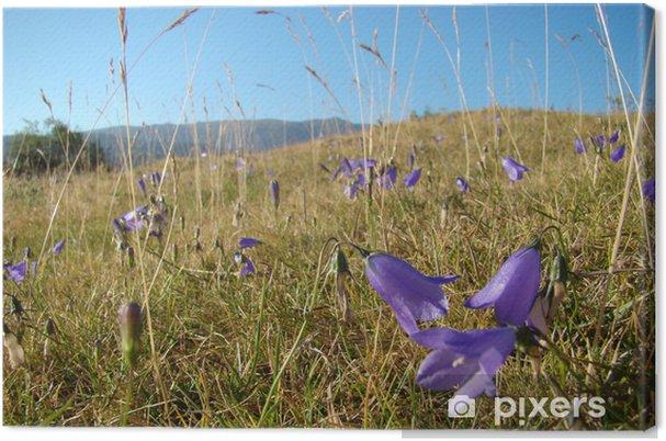 Obraz na płótnie Bellflower i traw, Aude, Pireneje - Kwiaty