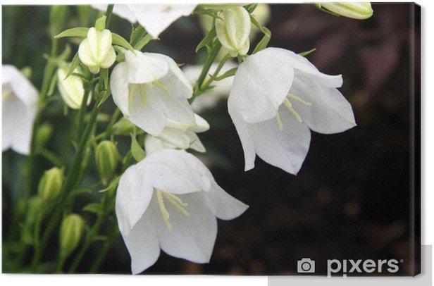 Obraz na płótnie Biała lilia - Dom i ogród