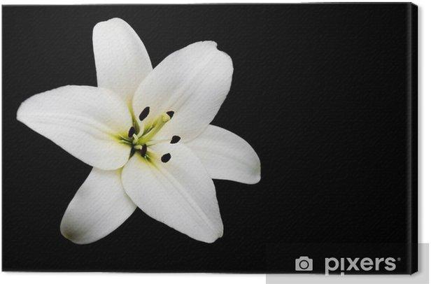 Obraz na płótnie Biała lilia - Pory roku