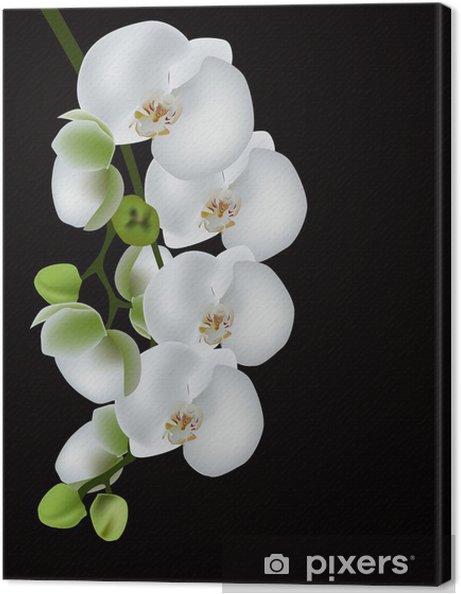 Obraz na płótnie Biała orchidea kwiat odizolowane na czarno - Tematy