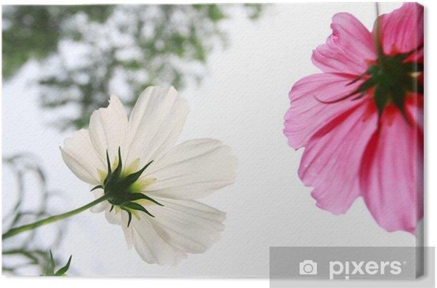 Obraz na płótnie Białe i różowe stokrotki w polu trawy z białym tłem - Kwiaty