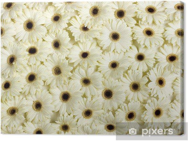Obraz na płótnie Białe kwiaty na wiosnę - Kwiaty