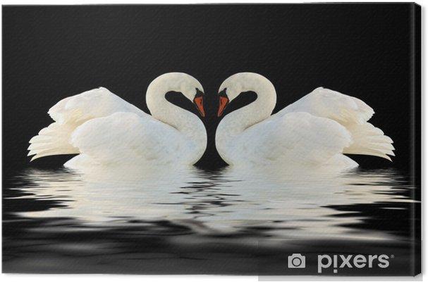 Obraz na płótnie Białe łabędzie - Łabędzie