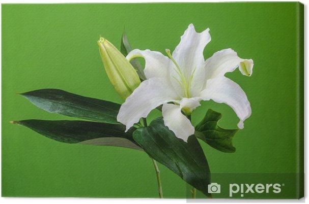 Obraz na płótnie Białe Lilly, zielone tło. - Kwiaty
