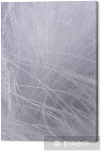 Obraz na płótnie Białe tło pióra - Pory roku