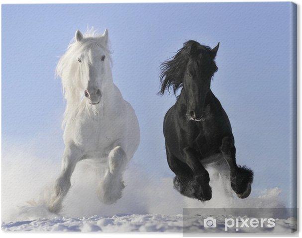Obraz na płótnie Biały i czarny koń - Przeznaczenia